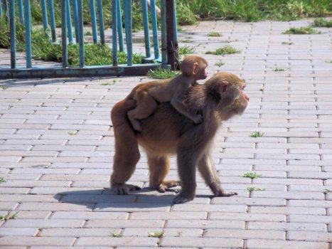 Tianjin_Zoo_and_FunPark___CCBYNCND_114.jpg